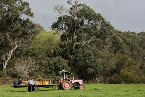 Boronia Farm - Accommodation Australia